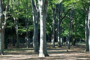 公園、森林