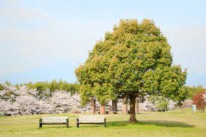 北勢中央公園-公園のベンチと巨木