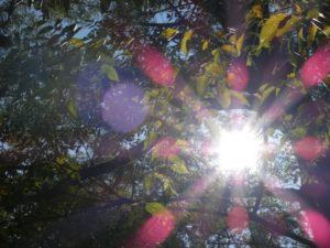 石手川公園-やわらかな光
