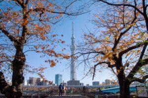 隅田公園‐秋のスカイツリー