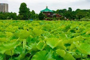 上野公園-不忍池弁天堂と不忍池